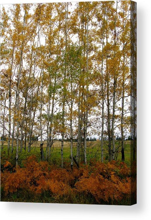 Aspen Acrylic Print featuring the photograph Aspen In Fall by Robert Bissett