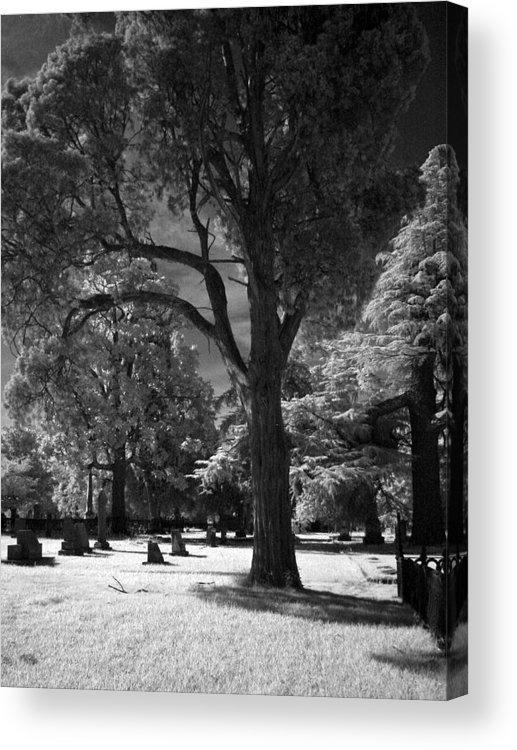 Photgraph Acrylic Print featuring the photograph At Peace by Michele Caporaso