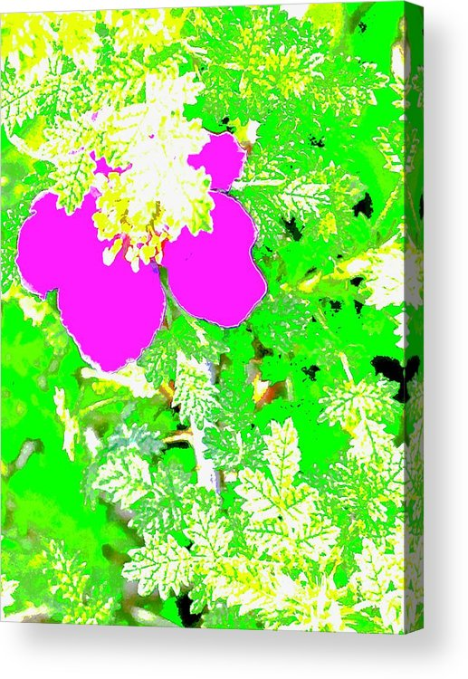 Baja Littleaf Rose Acrylic Print featuring the photograph Baja Littleaf Rose by Scott L Holtslander