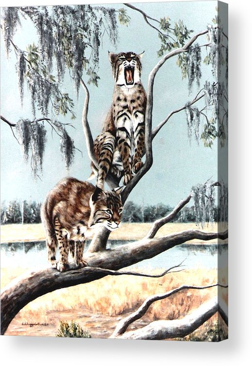 Bobcats Acrylic Print featuring the painting Bayou Bobcats by DiDi Higginbotham