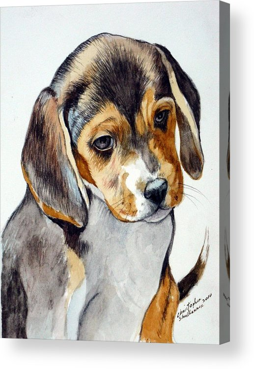 Beagle Acrylic Print featuring the painting Beagle Puppy by Christopher Shellhammer