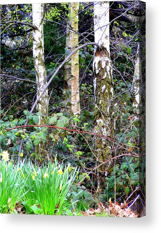 Birch Acrylic Print featuring the photograph Birch Trees In London by Mindy Newman