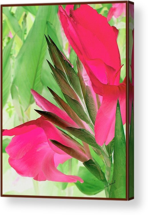 Flower Acrylic Print featuring the digital art Bird Of Paradise 2 by Jim Darnall