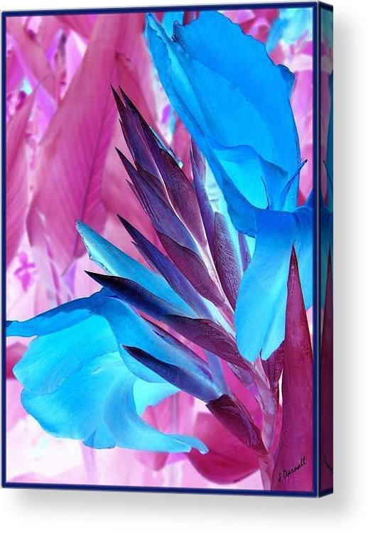 Flower Acrylic Print featuring the photograph Bird Of Paradise by Jim Darnall