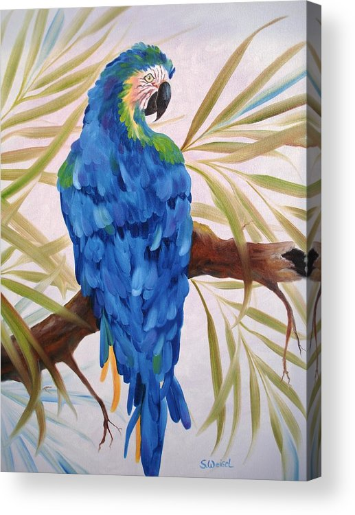 Wild Animal Exotic Bird Blue Macaw Tropical Acrylic Print featuring the painting Blue Macaw by Sherry Winkler