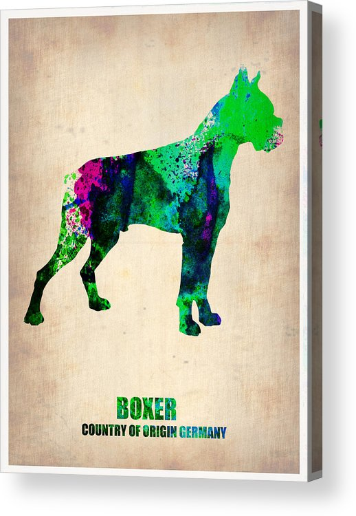 Boxer Acrylic Print featuring the painting Boxer Poster by Naxart Studio