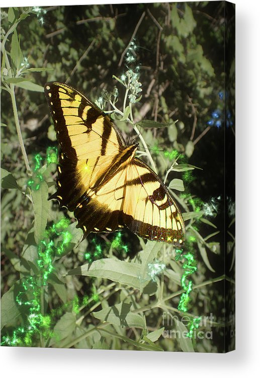 Eastern Tiger Swallowtail Acrylic Print featuring the photograph Butterfly Magic by Nicole Angell