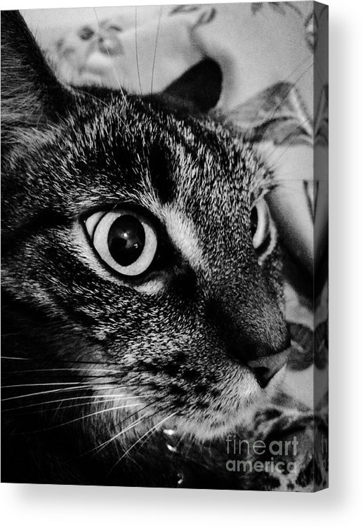 Cat Acrylic Print featuring the photograph Cat Eyes by Michael Gailey