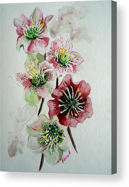 Floral Flower Pink Acrylic Print featuring the painting Christmas Rose by Karin Dawn Kelshall- Best