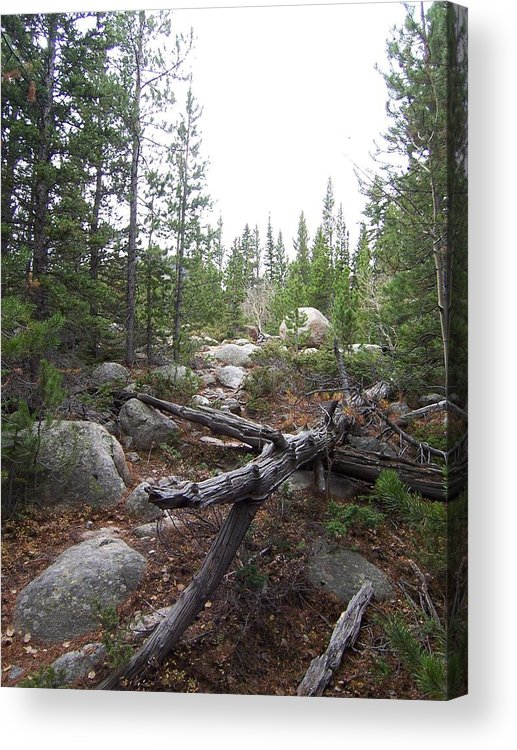 Landsscape Acrylic Print featuring the photograph Colorado Trees by Lisa Gabrius