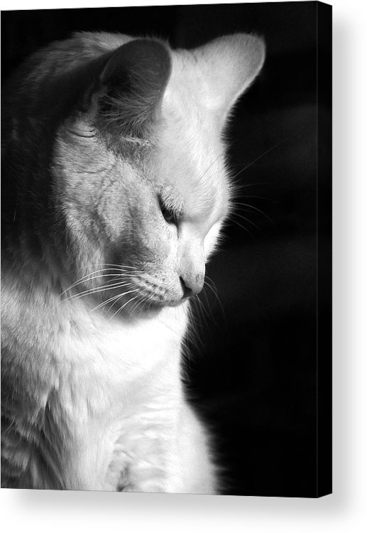 Nature Acrylic Print featuring the photograph Contempation by Bob Orsillo