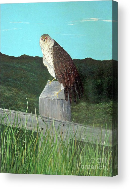 Copper Hawk Acrylic Print featuring the painting Copper Hawk by John Nickerson