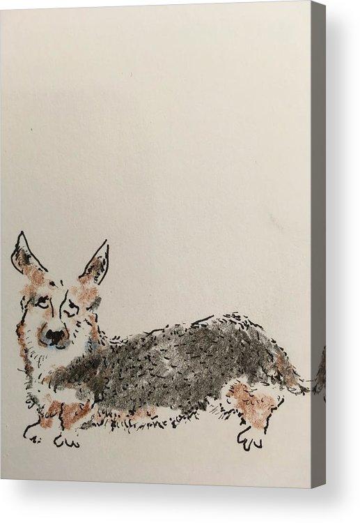 Acrylic Print featuring the drawing Corgi by Dan Cohn-Sherbok