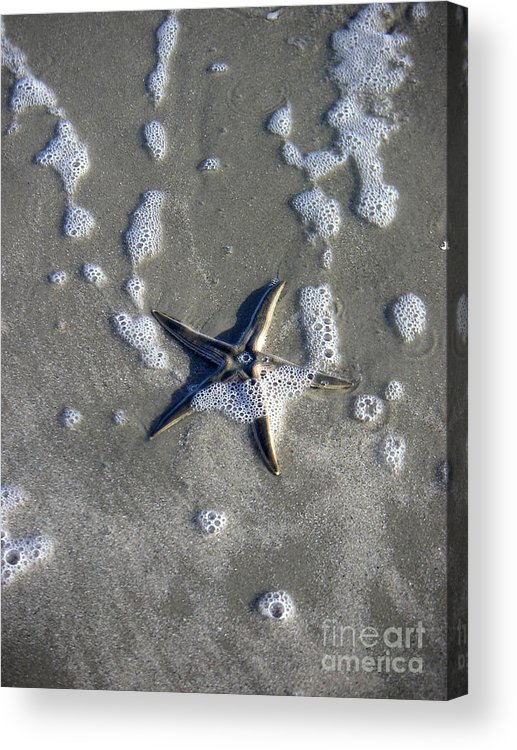 Nature Acrylic Print featuring the photograph Creatures Of The Gulf - A Fallen Star by Lucyna A M Green