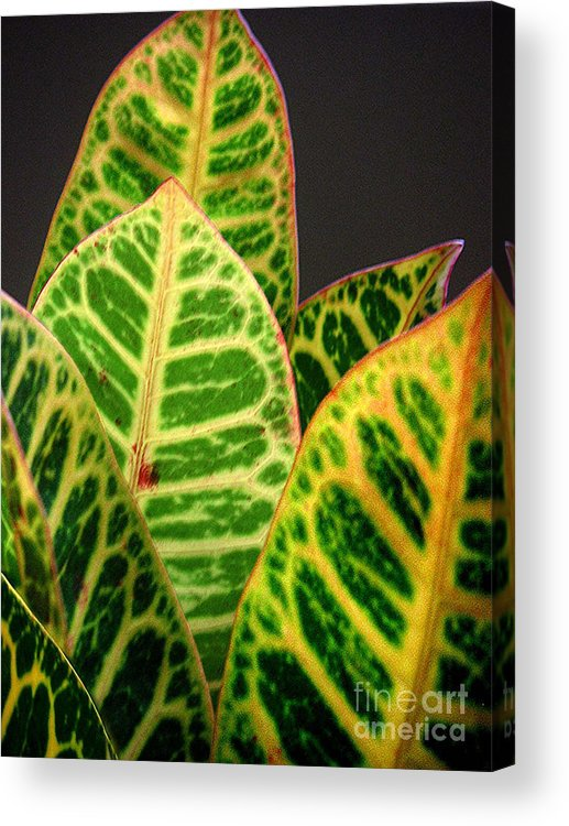 Nature Acrylic Print featuring the photograph Croton Leaves In Profile by Lucyna A M Green