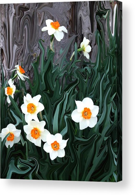 Flower Acrylic Print featuring the photograph Daffodills by Jim Darnall