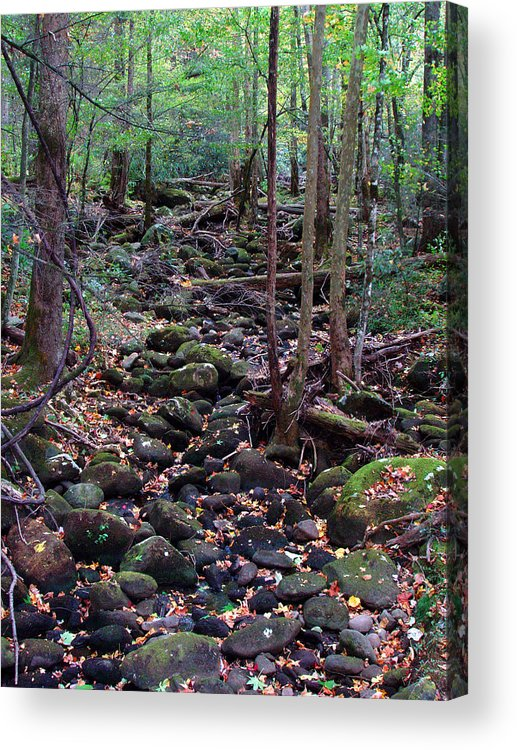River Acrylic Print featuring the photograph Dry River Bed- Autumn by Nancy Mueller