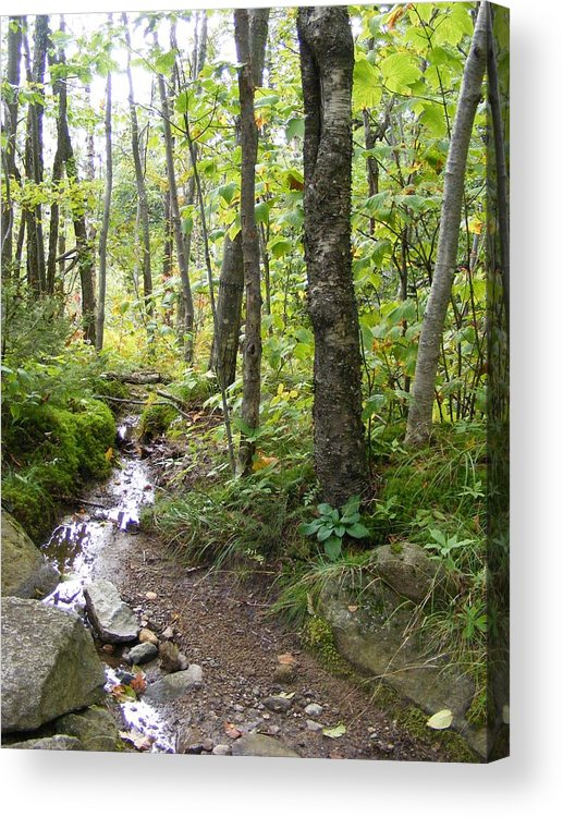 Forest Acrylic Print featuring the photograph Forest Stream by Alison Heckard