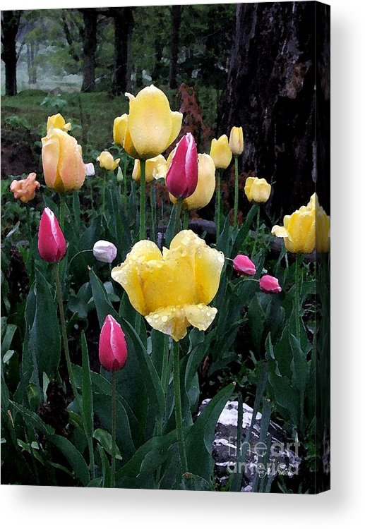 Tulips Acrylic Print featuring the photograph In The Garden by Judy Waller