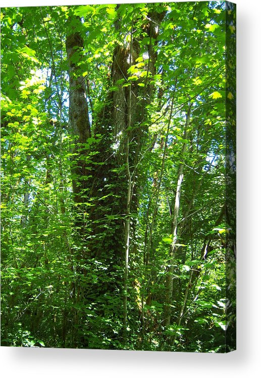 Tree Acrylic Print featuring the photograph It S Green by Ken Day