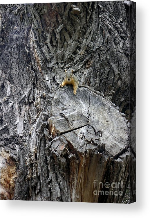Nature Acrylic Print featuring the photograph It's A Big World by Lucyna A M Green