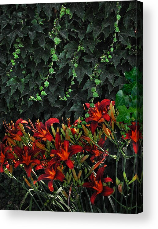 Flowers Landscape Acrylic Print featuring the photograph Ivy Over by Richard Gordon