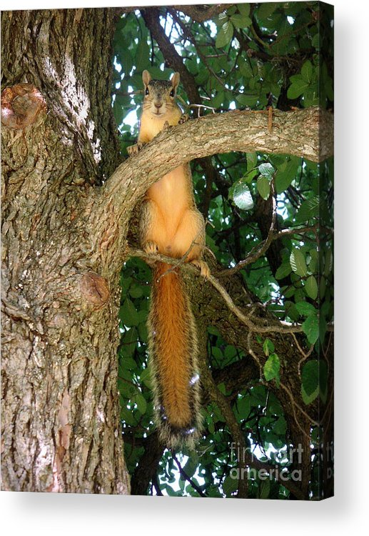 Nature Acrylic Print featuring the photograph Just Hanging Around by Lucyna A M Green