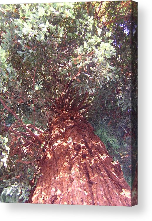 Tree Acrylic Print featuring the photograph Keep Looking Up by Valerie Josi