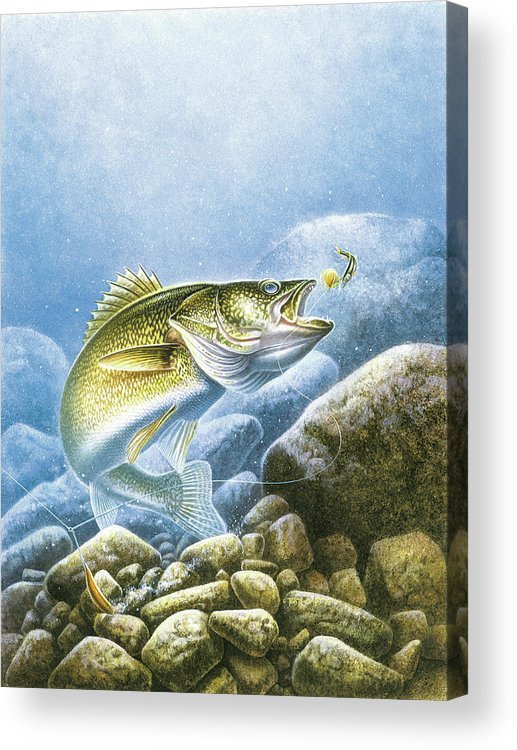 Jon Q Wright Acrylic Print featuring the painting Lindy Walleye by JQ Licensing
