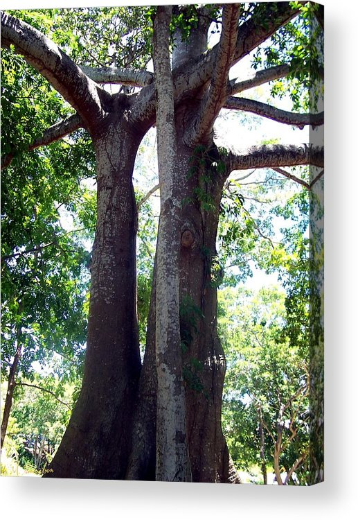 Trees Acrylic Print featuring the photograph Lover's Tree by Elise Samuelson