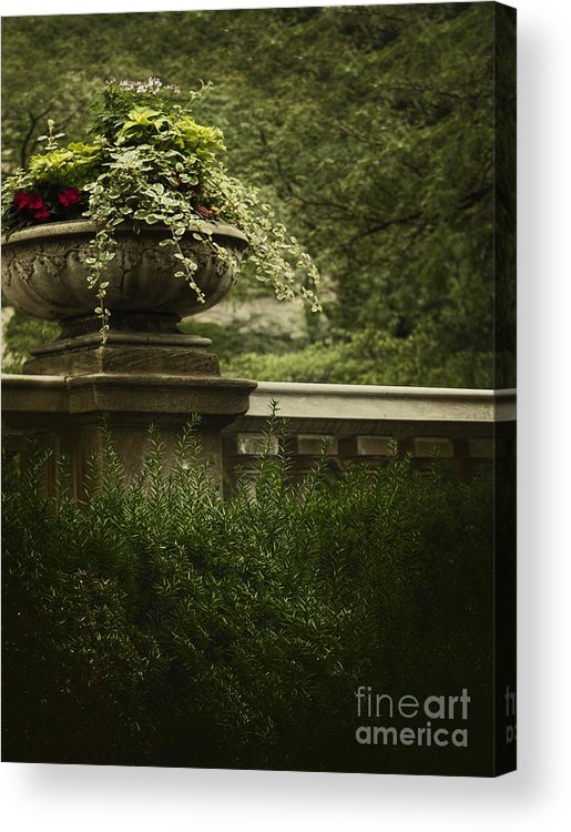 Ivy Acrylic Print featuring the photograph Lush by Margie Hurwich