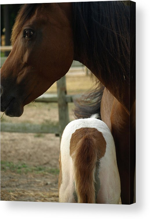 Mom Acrylic Print featuring the painting Mare And Foal by Kim