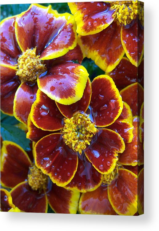 Flowers Acrylic Print featuring the photograph Mari 1 by Vijay Sharon Govender