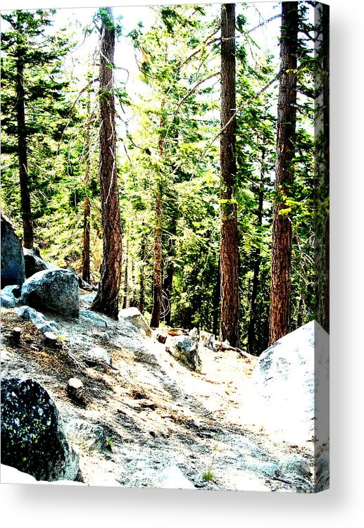 Trees Acrylic Print featuring the painting Morning Breaks by Tim Tanis