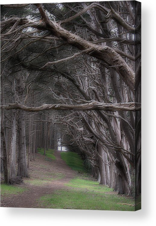 Landscape Acrylic Print featuring the photograph Moss Beach Trees 4191 by Karen W Meyer