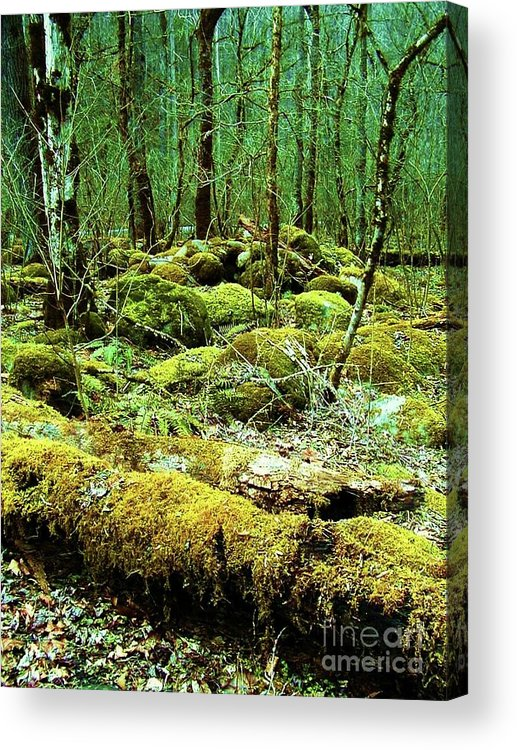 Trees Acrylic Print featuring the photograph Moss Consuming The Forest by Diana Dearen