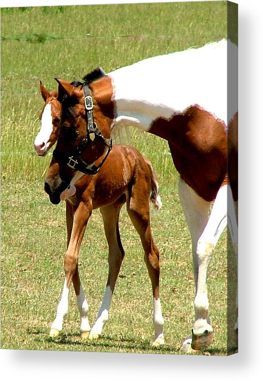 Horse Acrylic Print featuring the photograph Mother And Newborn by Donna Thomas