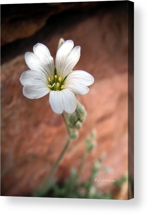 Alpine Acrylic Print featuring the photograph Mountain Beauty by RC DeWinter