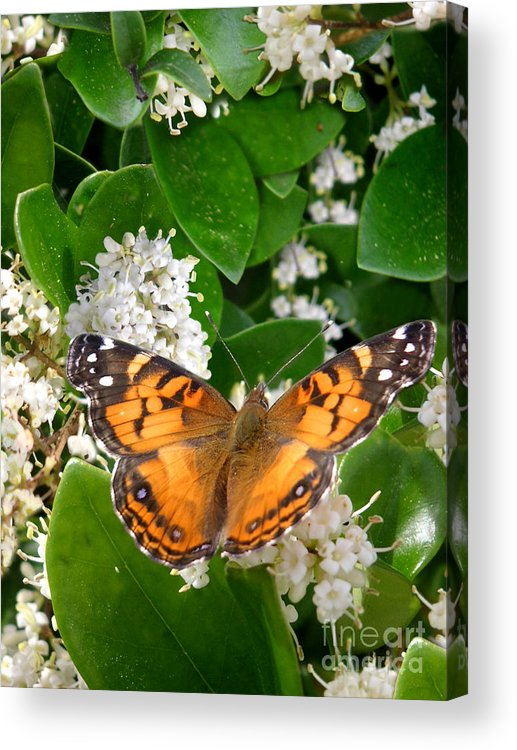 Nature Acrylic Print featuring the photograph Nature In The Wild - On Golden Wings by Lucyna A M Green