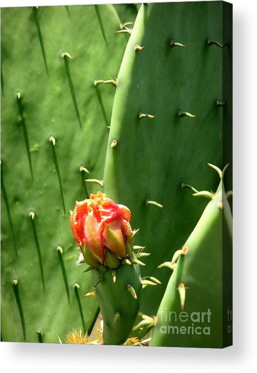 Nature Acrylic Print featuring the photograph Nature In The Wild - Red Against Green by Lucyna A M Green