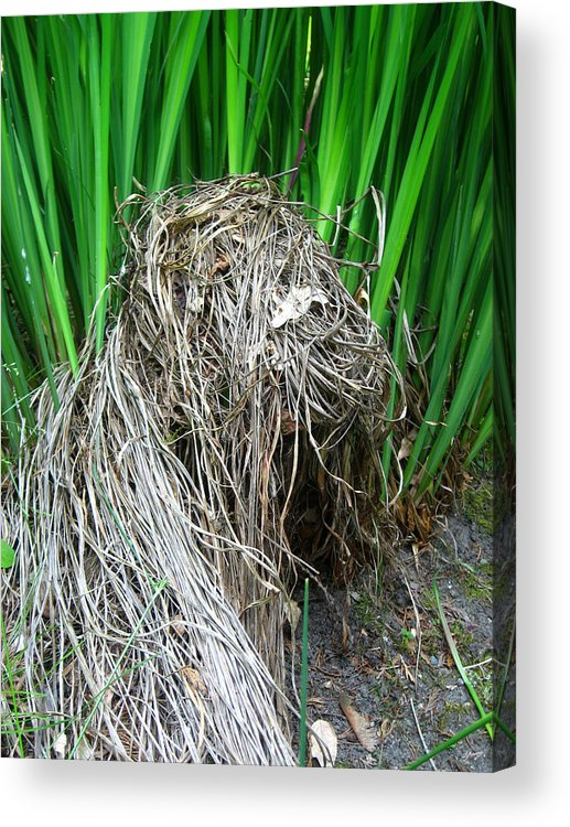 Grass Acrylic Print featuring the photograph New And Old by Aliza Souleyeva-Alexander