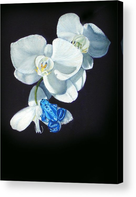 Blue Morph Frog Acrylic Print featuring the painting Orchid Treat by Darlene Green
