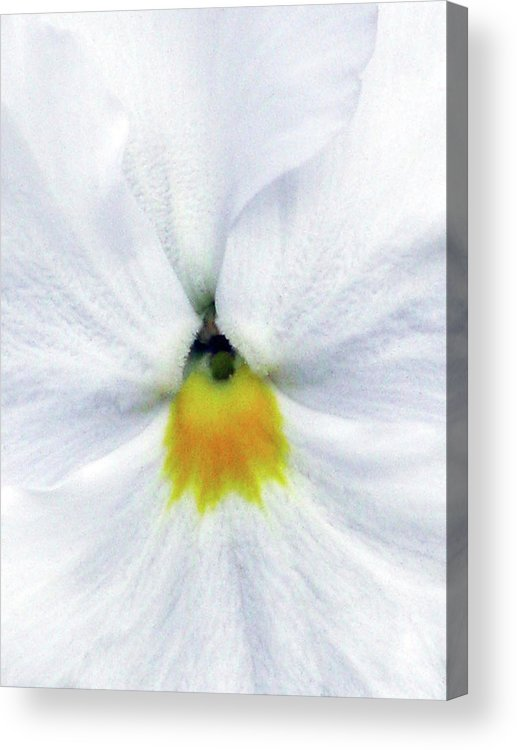 Pansy Acrylic Print featuring the photograph Pansy 05 - Thoughts Of You by Pamela Critchlow
