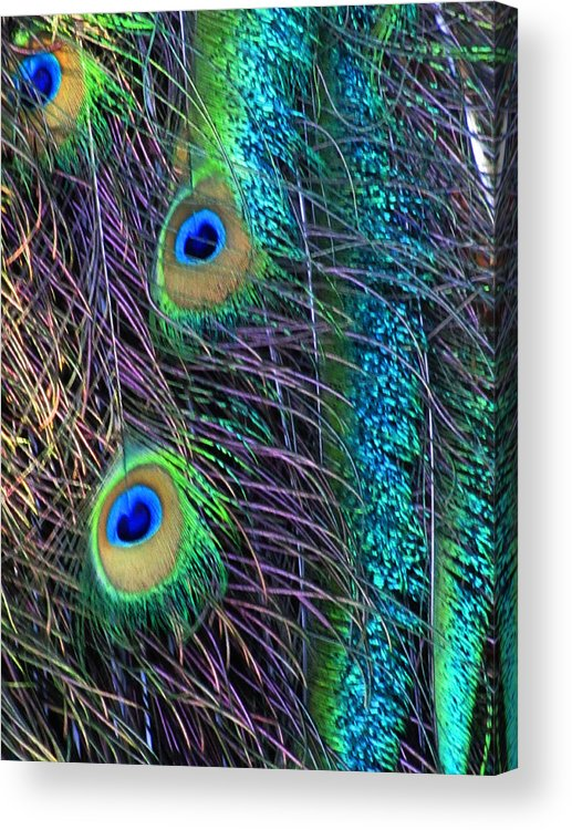 Peacock Acrylic Print featuring the photograph Peacock Feathers by Vijay Sharon Govender