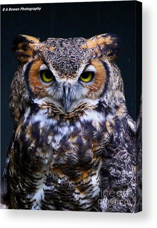 Great Horned Owl Acrylic Print featuring the photograph Portrait Of A Wise Man by Barbara Bowen