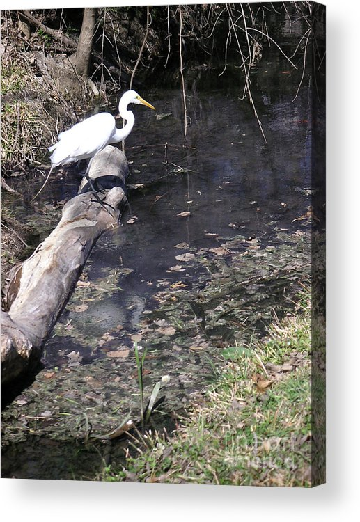 Nature Acrylic Print featuring the photograph Positioning For The Jump by Lucyna A M Green