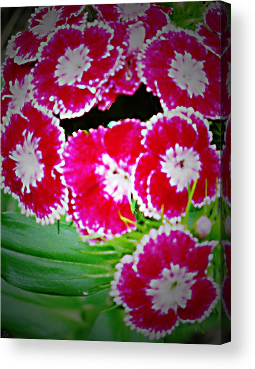Radiant Red Flower Design. Acrylic Print featuring the photograph Radiant Red by Debra   Vatalaro