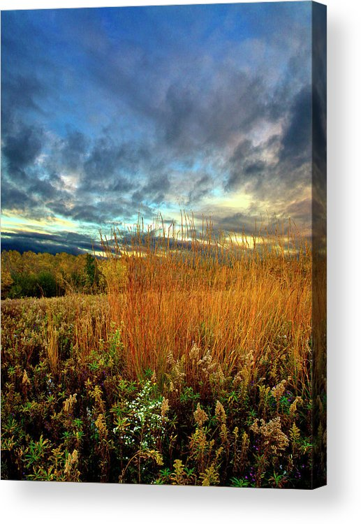 Horizons Acrylic Print featuring the photograph Reaching by Phil Koch