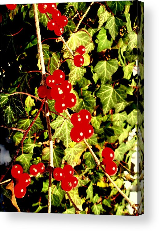 Red Berries Acrylic Print featuring the photograph Red Berries And Ivy by Beth Akerman