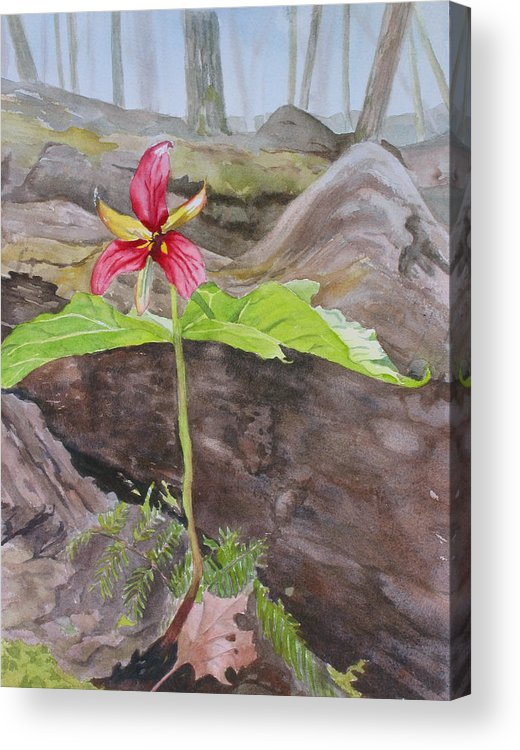 Red Trillium Acrylic Print featuring the painting Red Trillium In The Spring by Debbie Homewood